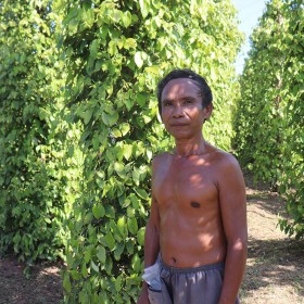 Black Kampot Pepper PGI - Small Farmers
